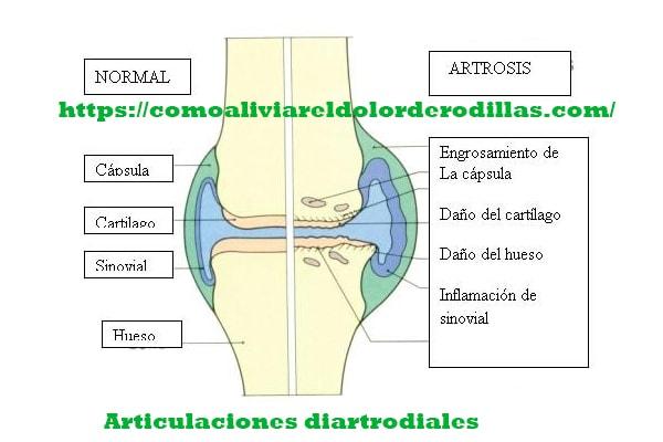 articulaciones diartrodiales