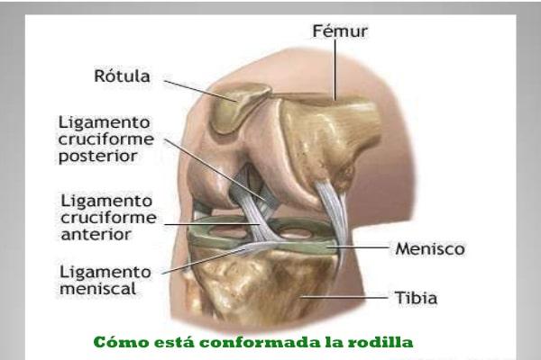 parte de las rodillas